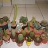 cactusmimile56